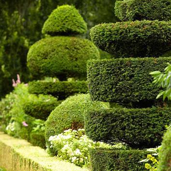 Plant Rentals & Sales