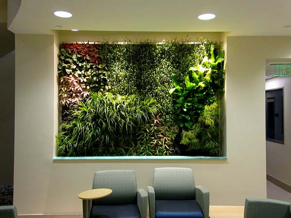living walls can be created with air plants and succulents which can offer a cleancrisp and touch with a variety of plants to choose from