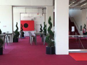 Live Plant Arrangements